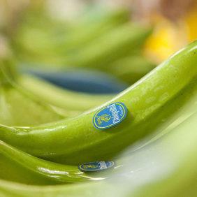 Keine Bananen verschwendet