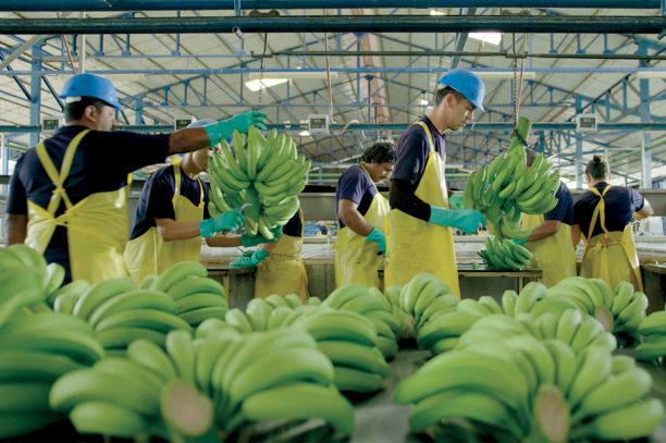 Farmer's code Chiquitas Nachhaltigkeit