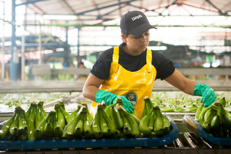 Wasser-Fußabdruck-Management auf Chiquita Farmen spart 1,8 Milliarden Liter Wasser pro Jahr ein - 1