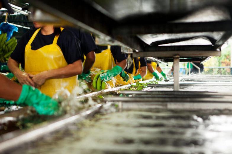 Wasser-Fußabdruck-Management auf Chiquita Farmen spart 1,8 Milliarden Liter Wasser pro Jahr ein - 2