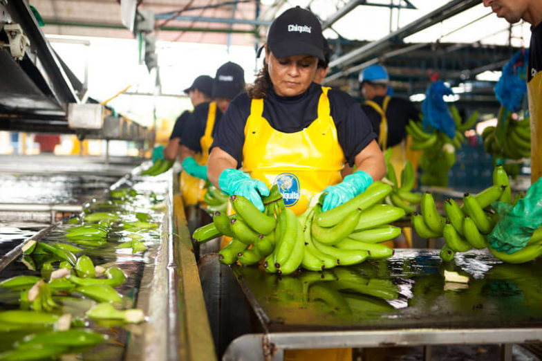 Wasser-Fußabdruck-Management auf Chiquita Farmen spart 1,8 Milliarden Liter Wasser pro Jahr ein - 3
