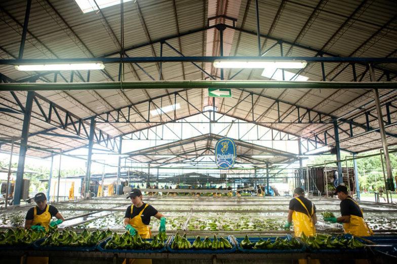 Wasser-Fußabdruck-Management auf Chiquita Farmen spart 1,8 Milliarden Liter Wasser pro Jahr ein - 4