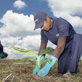 Chiquitas führende Rolle bei der Erhaltung der Artenvielfalt