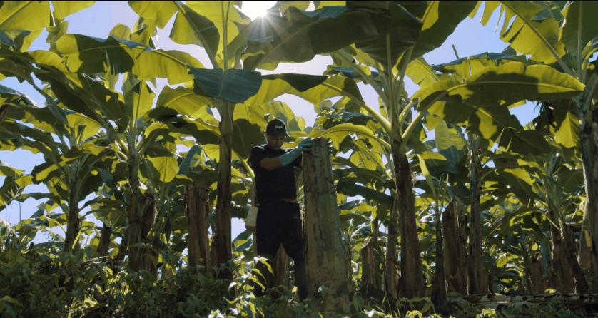 Nachhaltige_Landwirtschaft