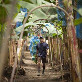 ChiquitaBananen auf der Farm: alles dreht sich um Nachhaltigkeit